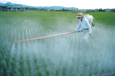 Slik ser en monokultur ut. Fordi den er mer utsatt for skadedyr og sykdom (siden det ikke finnes så store områder med kun en sort naturlig), må man bruks store mengder sprøytemidler på plantene. Bilde: Global Water Partnership / Flickr
